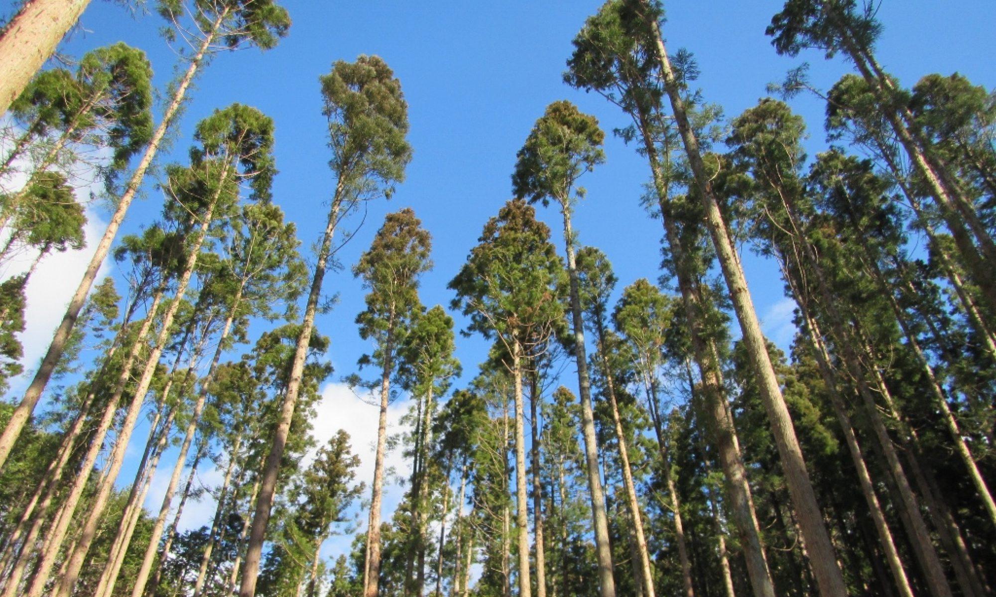 田村森林組合